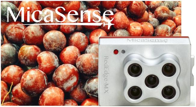 MicaSense社RedEdge-MXの活用事例:プラム農園のクロロシス発見